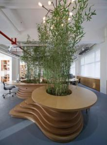 living bamboo office divider
