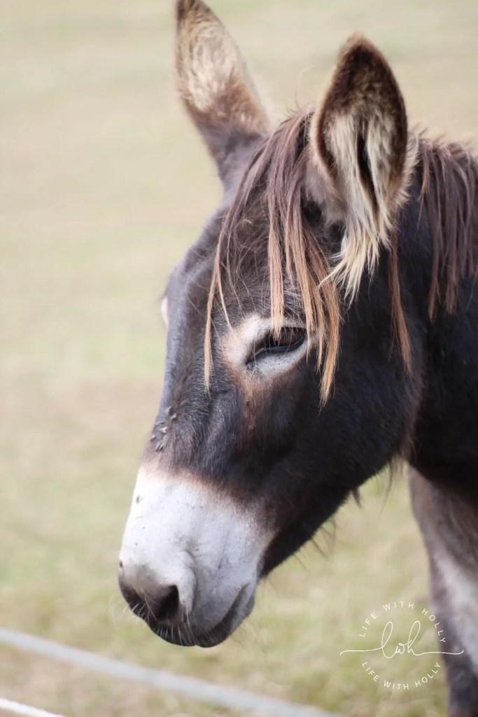 Donkey, Holmfirth - Summer Walks - Life with Holly
