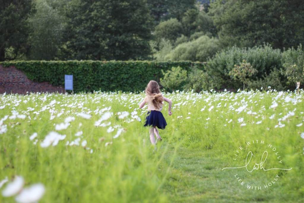 White Cosmos Field - Harewood House - Seeds of Hope Exhibition - Life with Holly Blog