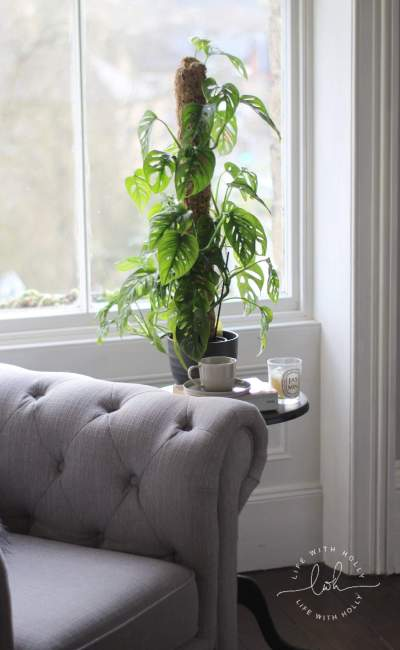 House Plants That Don't Die in Victorian Houses