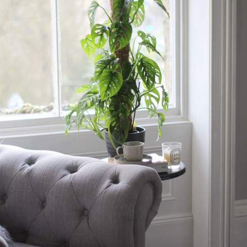 Monstera Monkey Mask Plant - - House Plants for Period Properties - House Plants that Don't Die in Victorian Houses