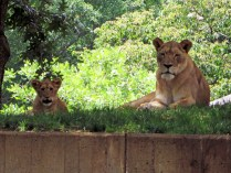 Mom and one of the cubs
