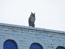A cast iron owl to scare off pigeons