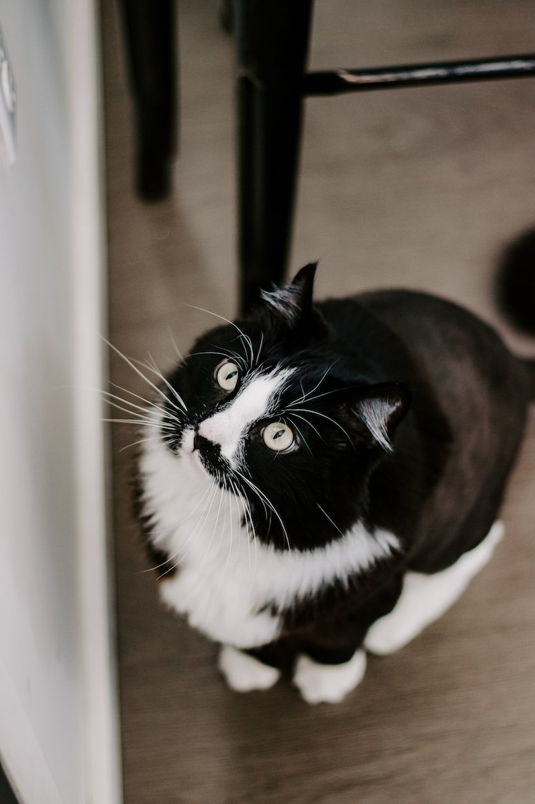 how we pet share cat sharing tips and how to make it work for your family