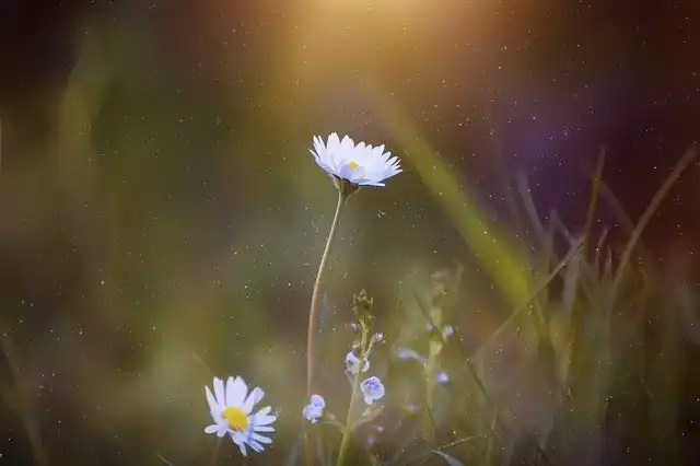 Daisy to represent personal growth