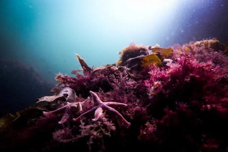 サンゴ 産卵