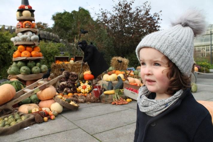 The Botanic Gardens Dublin at Halloween