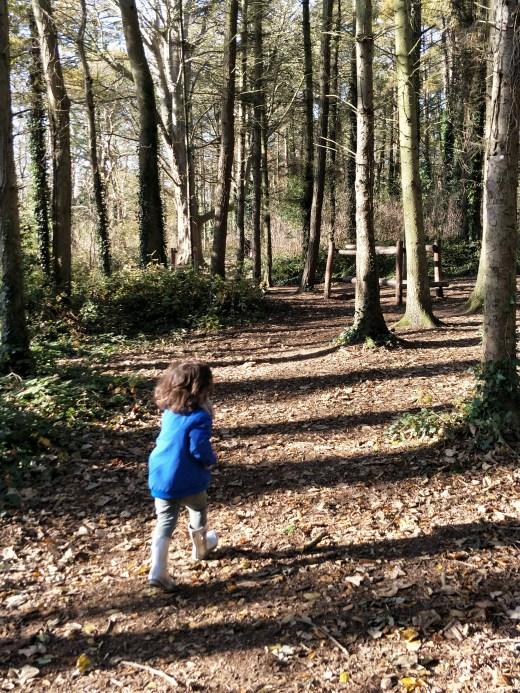 Malahide Castle Woods