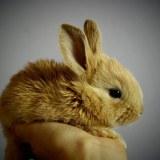 初心者がウサギ飼育に必要な物。レビュー&口コミ