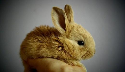 【ウサギ】初心者が初めて飼う時に、最低限必要な物とは!?