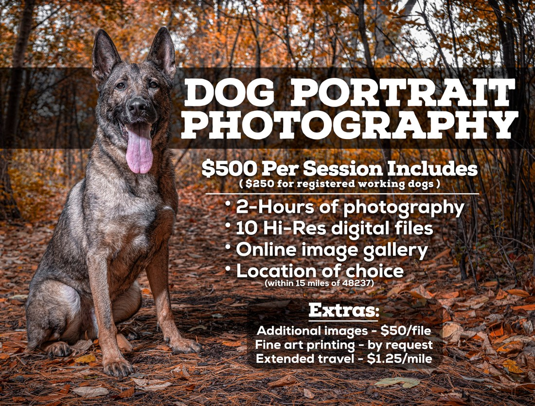 Dog Photography Details