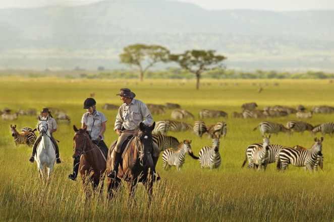 LXP - Beautiful Location Getaway Travel To Tanzania Serengeti National Park Zebras