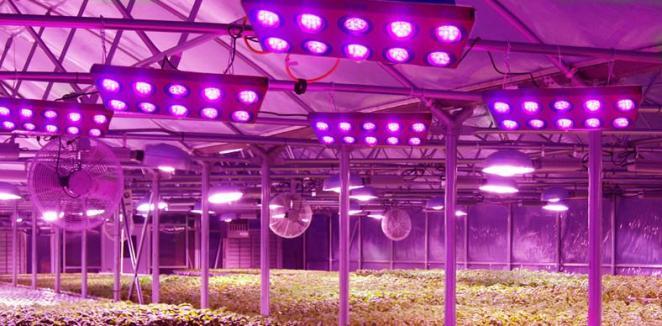 LXP - Lifexpe - LED Grow Lights