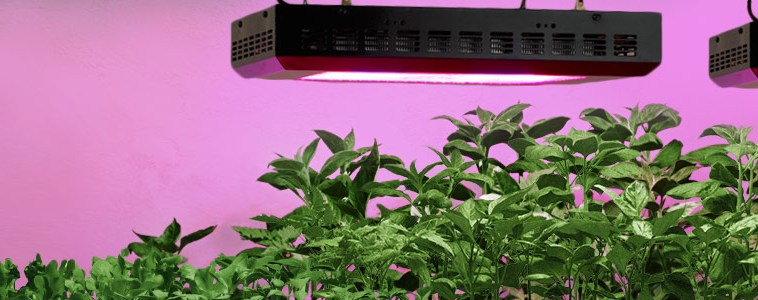 How To Grow Peppers Indoor Under LED Grow Lights