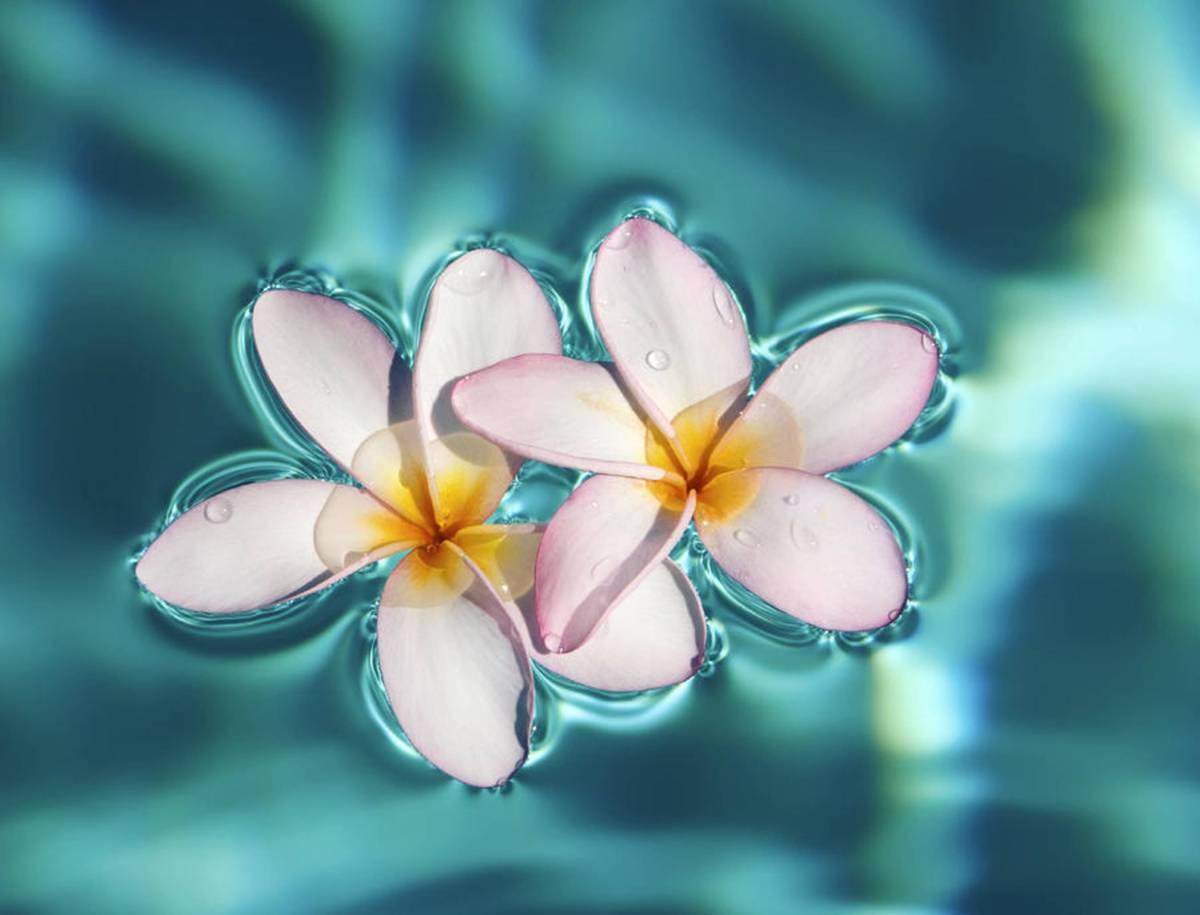 buy Exotic or Tropical Flowers online