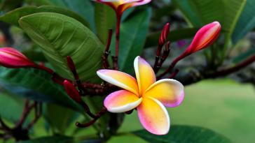 3 Smart Ways to Care of Exotic or Tropical Flowers