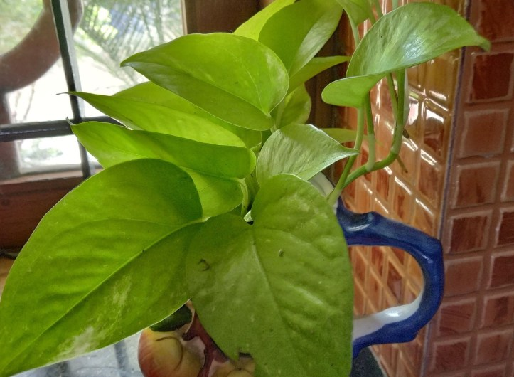 Air purifying plants.