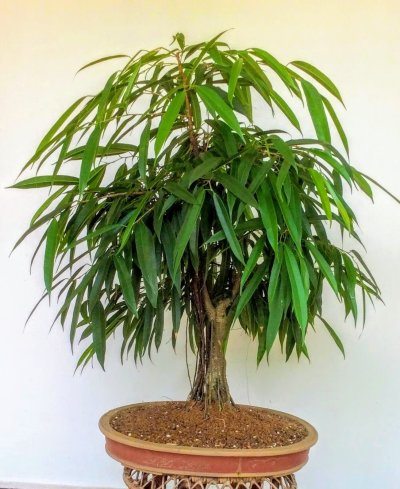 Positive energy plants for indoors