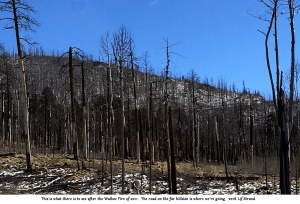 Photo of Wallow Fire burn area