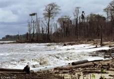 Erosion du littoral guyanais © C. Proisy IRD UMR Amap
