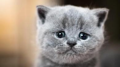صورة فرنسا: تطالب من المصابين بفيروس كورونا بالحد من التعامل مع قططهم