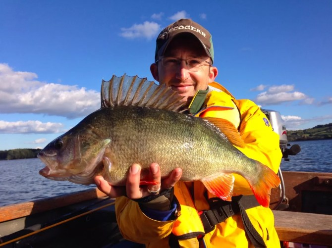 3lb 12oz Perch from Chew Valley