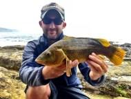 Wrasse Fishing Purbecks Dorset