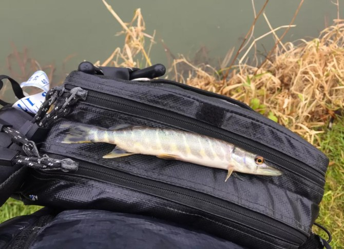 Pocket Sized Pike