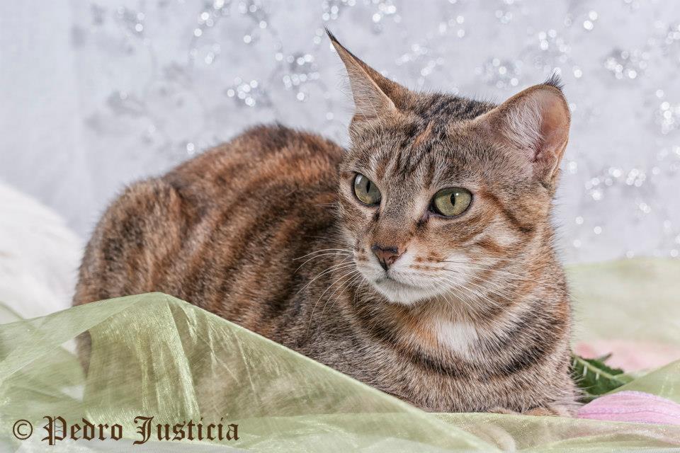 foto mascota 18 lightangel Pedro J Justicia - Album para mascota o con mascota -