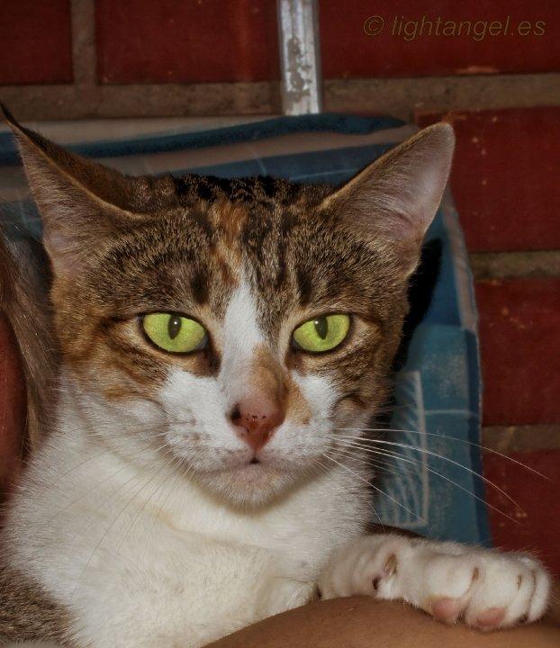 foto mascota 3 lightangel Pedro J Justicia - Album para mascota o con mascota -