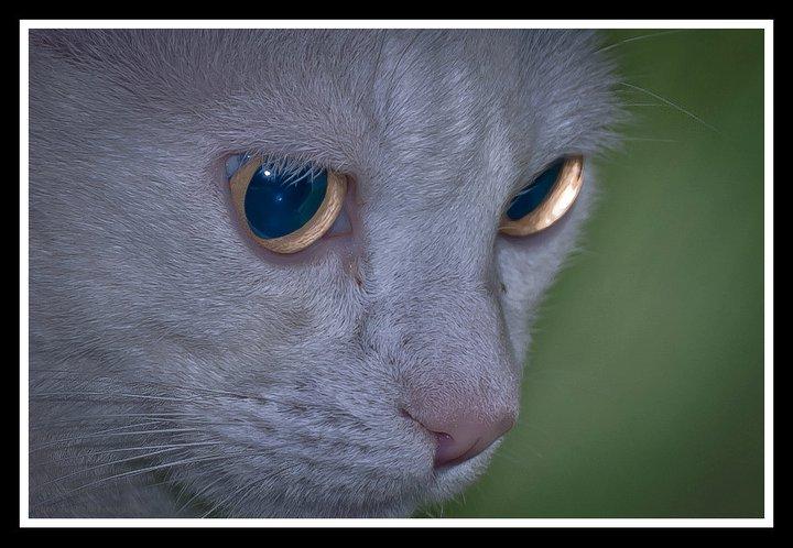 foto mascota 8 lightangel Pedro J Justicia - Album para mascota o con mascota -