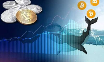 Bitcoin whales: Number of people holding lots of BTC increased exponentially