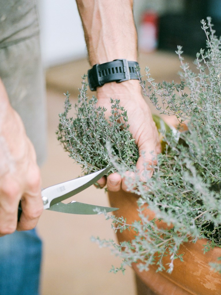 Cutting fresh herbs from the garden with Long Spoon Catering by Lightbulb League brand photography