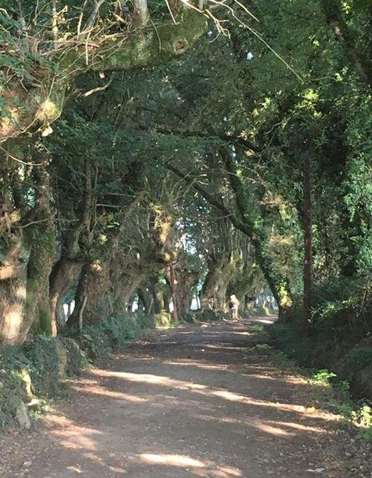 My Camino de Santiago Adventure #2