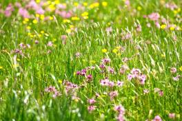 Wild flowers growing on the Loop Head Peninsula in County Clare. Image Ann O'Connell Images https://www.facebook.com/pages/Ann-OConnell-Images/113577052053313?fref=ts