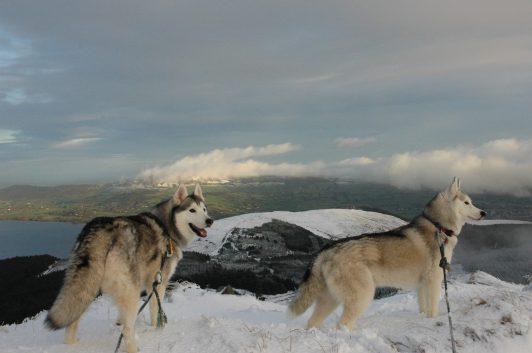 Jenny McGowan Photography captured this image on Moylussa (Co. Clare's highest peak) near Killaloe, overlooking Lough Derg and Tountinna