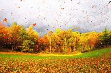 autumn leaves blowing