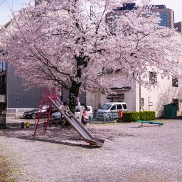 Slide under the cherry blossoms and children