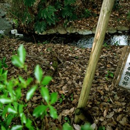 A signboard abandoned in a stream