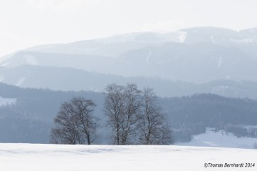 Group of trees in winter landscape.