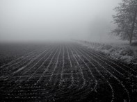 furrowedfield