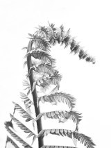 unfurlingfern7