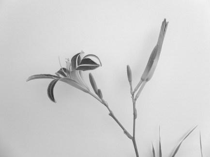 daylily0714