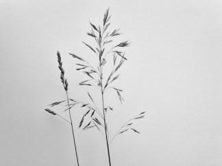 summergrasses3