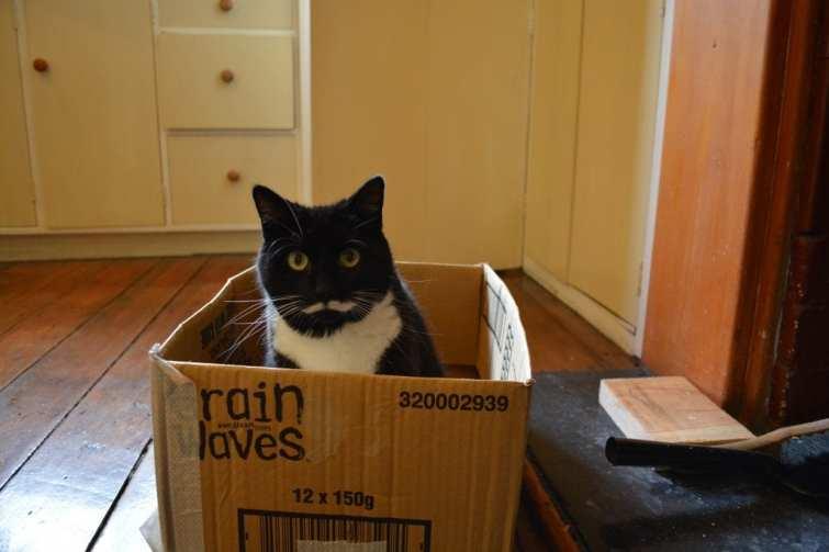 My cat sitting in a box