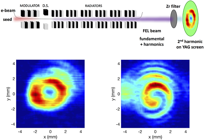 Extreme-ultraviolet vortices from a free-electron laser