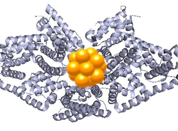 Gold protein clusters could be used as environmental and health detectors