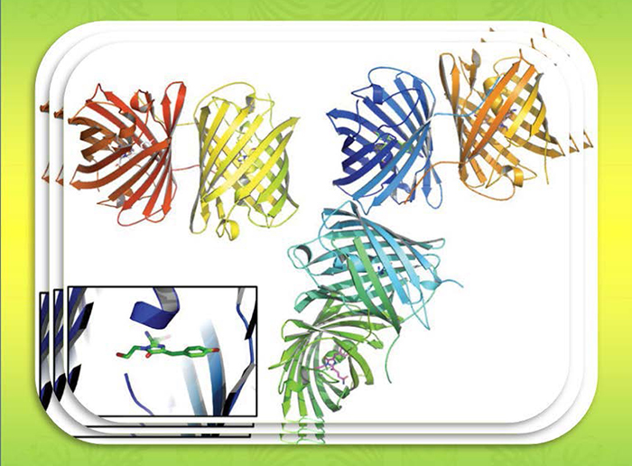 Discovery of the novel green fluorescent protein by NSRRC