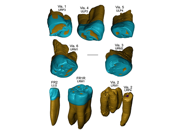 Research on ancient teeth reveals complexity of human evolution