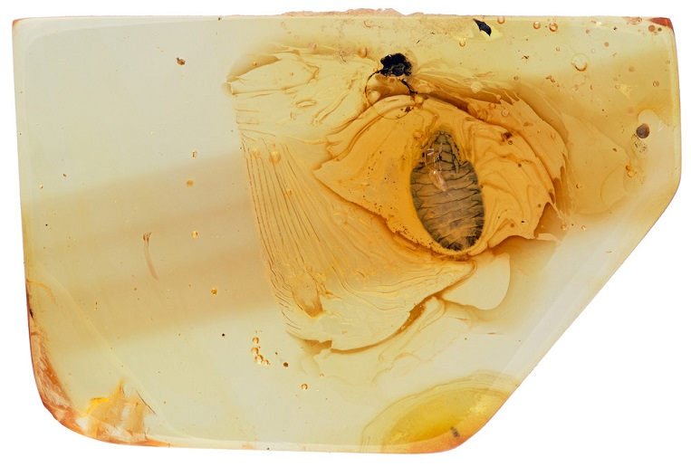 3D X-ray view of an amber fossil